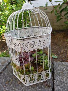 Sukkulenten-Käfig für den Garten
